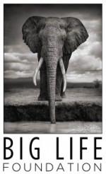 logo-big-life-foundation