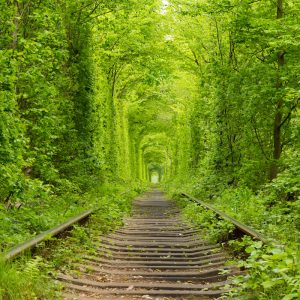 "Ukraine. Spring. Railway in the dense deciduous forest. ""Tunnel Of Love"""