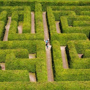 61358469 - people walking on green bushes labyrinth, hedge maze.